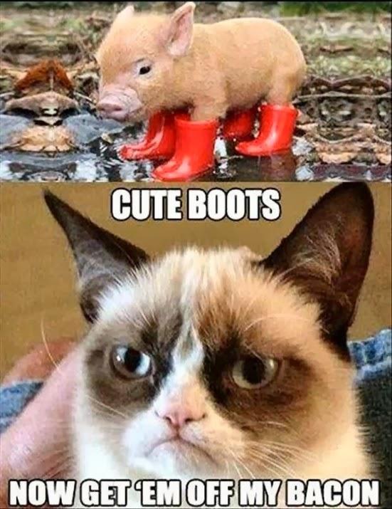 uses of cat animal